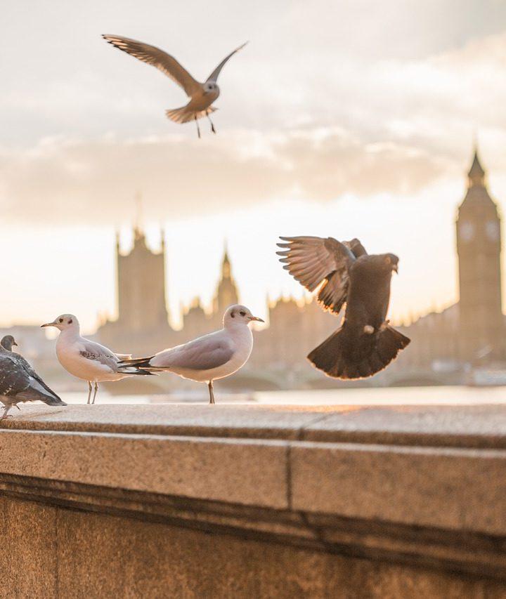 Ako na najlacnejšie letenky do Londýna?